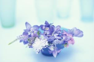 ブルー平皿に入れたデルヒニューム・キンギョソウ等の写真素材 [FYI03913664]