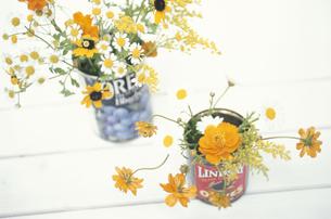 缶2個にマトリカリア・ルドベギア・キバナコスモス等の写真素材 [FYI03913677]