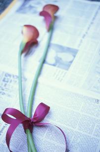 英字新聞の上に赤いリボンで結んだ赤カラー2本の写真素材 [FYI03913687]