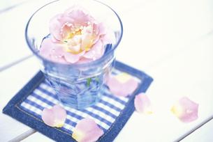 グラスに入れたピンクバラの写真素材 [FYI03913695]