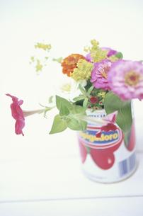 缶に生けたアルケミラモリス・オールドローズ等の写真素材 [FYI03913703]