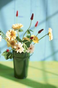花瓶に生けたストロベリーキャンドル・ガーベラの写真素材 [FYI03913744]