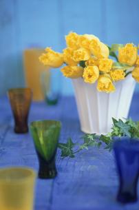 白い鉢にチューリップ・周りにカラーグラス・アイビーの写真素材 [FYI03913746]