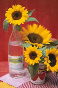 ガラス瓶・缶それぞれに生けたヒマワリの写真素材 [FYI03913749]