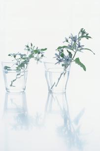 グラスに活けた小花の写真素材 [FYI03913865]