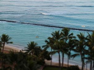 ワイキキビーチとパームツリーの写真素材 [FYI03913928]