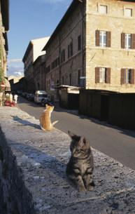 街中に座る2匹の猫の写真素材 [FYI03914039]