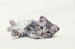 ネコの写真素材 [FYI03914332]