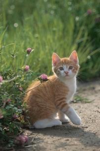 ネコと花の写真素材 [FYI03914363]