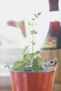 赤いスチールのバケツの中の植物の写真素材 [FYI03914831]