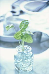 ビンに入った植物イメージの写真素材 [FYI03914835]