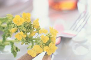 カトラリーの上の菜の花の写真素材 [FYI03914858]