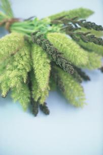 束ねた植物の写真素材 [FYI03914934]