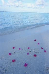 ビーチの花びらとLOVEの文字の写真素材 [FYI03915421]