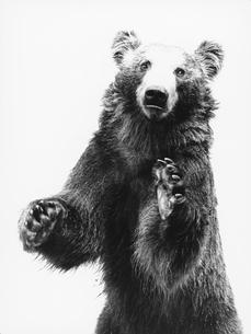 クマの写真素材 [FYI03915575]
