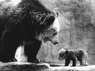 クマの親子の写真素材 [FYI03915577]