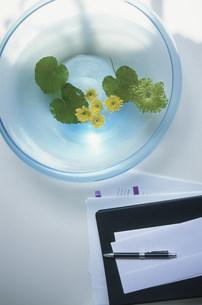 花を活けたガラスの器とペン等の写真素材 [FYI03915669]