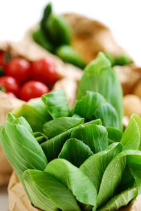 野菜の写真素材 [FYI03917137]