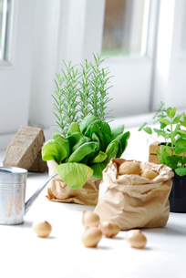 野菜とハーブの写真素材 [FYI03917148]