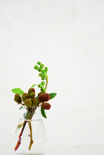 花瓶に生けたブラックベリーとブルーベリーの写真素材 [FYI03917181]
