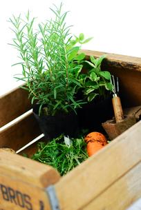 木箱の中のハーブと野菜の写真素材 [FYI03917183]