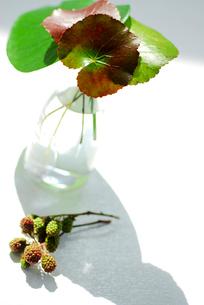 花瓶に生けた葉の写真素材 [FYI03917188]