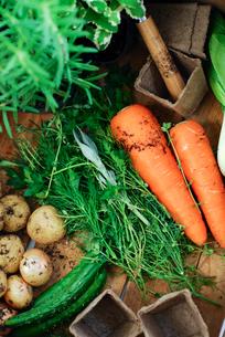 野菜とハーブの写真素材 [FYI03917189]