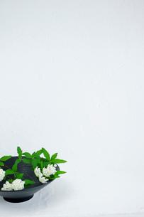 コデマリの写真素材 [FYI03917269]