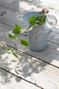 ブリキの水差しに生けた植物の写真素材 [FYI03917311]