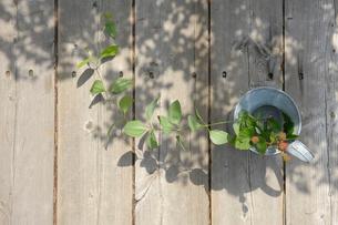ブリキの水差しに生けた植物の写真素材 [FYI03917312]