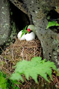 卵のからとヘビイチゴの写真素材 [FYI03917549]
