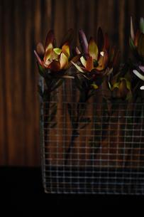 カゴに生けたレウカデンドロンの写真素材 [FYI03917579]