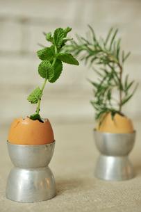 卵の殻に入ったミントとローズマリーの写真素材 [FYI03917937]