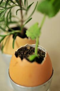 卵の殻に入ったミントとローズマリーの写真素材 [FYI03917940]