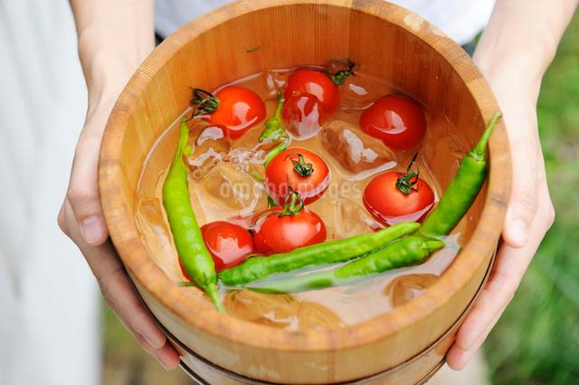 トマトと青唐辛子が入った桶を持つ女性の手元の写真素材 [FYI03918127]