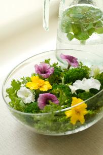 サラダとミント水の写真素材 [FYI03918371]