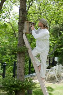 木に巣箱を取り付ける男性の写真素材 [FYI03918398]