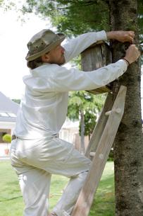 木に巣箱を取り付ける男性の写真素材 [FYI03918399]