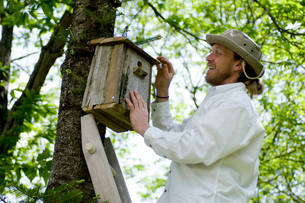 木に巣箱を取り付ける男性の写真素材 [FYI03918400]
