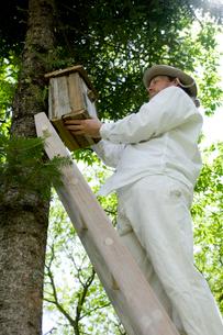 木に巣箱を取り付ける男性の写真素材 [FYI03918401]