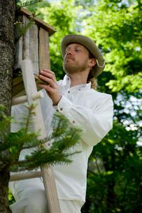 木に巣箱を取り付ける男性の写真素材 [FYI03918402]