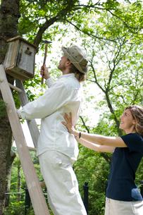 木に巣箱を取り付ける男性と女性の写真素材 [FYI03918404]