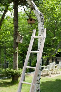 木とはしごと巣箱の写真素材 [FYI03918432]