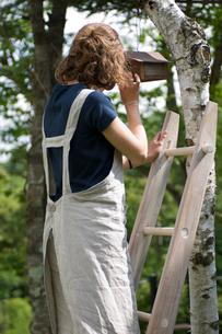 木とはしごと巣箱と女性の写真素材 [FYI03918433]