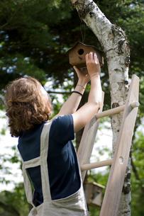 木に巣箱を取り付ける女性の写真素材 [FYI03918434]