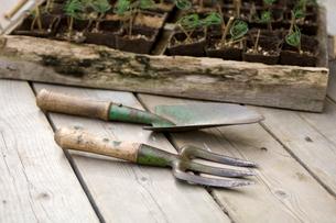 ヒマラヤ杉の苗箱とスコップとガーデンフォークの写真素材 [FYI03918450]