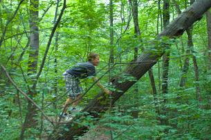 木に登る子供の写真素材 [FYI03918474]
