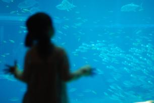水族館の女の子の写真素材 [FYI03918749]