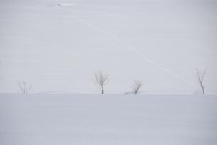 雪景色の写真素材 [FYI03918761]