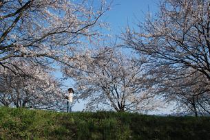 女の子と桜の写真素材 [FYI03918796]